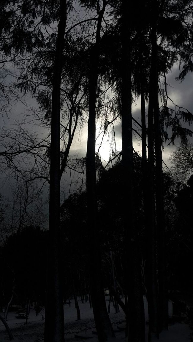 Darkness And Light Beşiktaş Yıldızpark Istanbuldayasam Istanbul Turkey