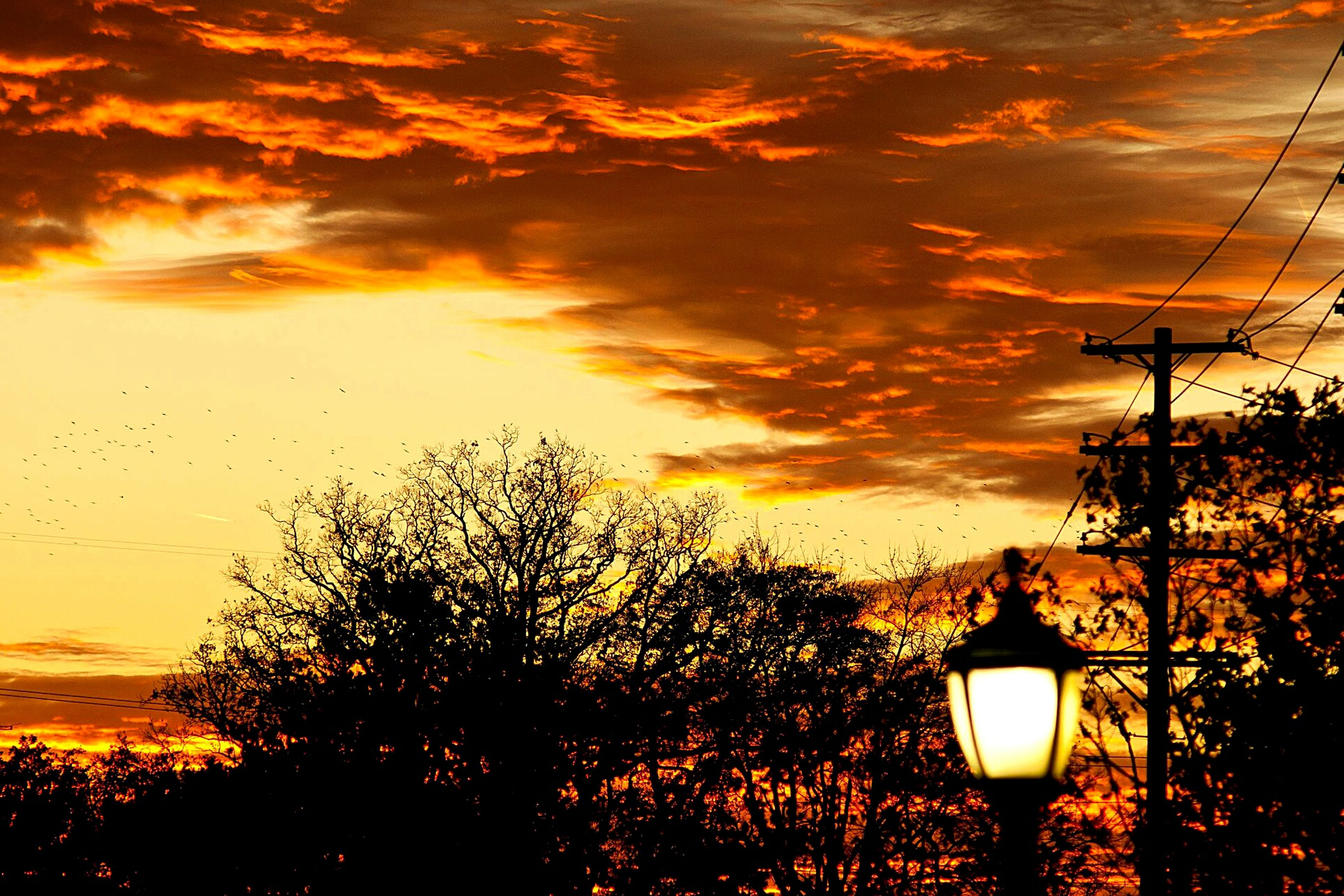sunset, sky, silhouette, lighting equipment, street light, orange color, low angle view, tree, electricity, beauty in nature, tranquility, scenics, illuminated, cloud - sky, sun, nature, tranquil scene, dusk, electric light, idyllic