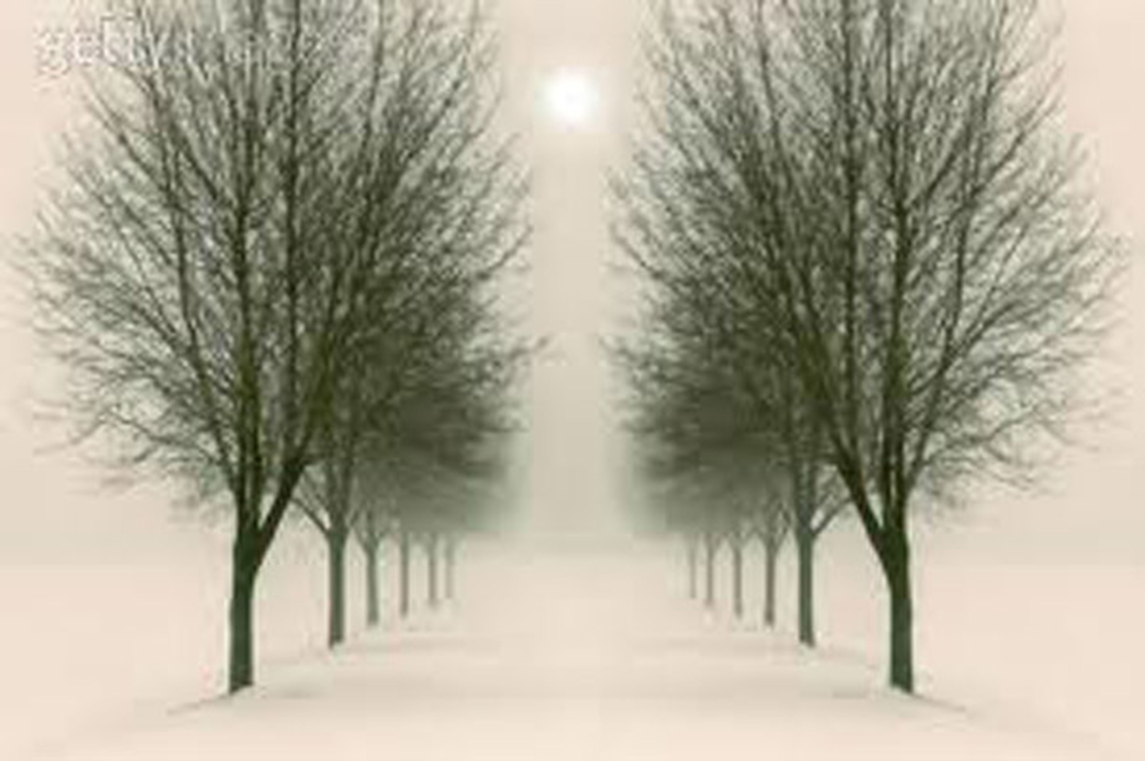 bare tree, tree, the way forward, winter, snow, cold temperature, tranquility, diminishing perspective, weather, branch, tranquil scene, treelined, nature, vanishing point, beauty in nature, season, road, scenics, tree trunk, landscape