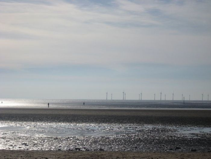 A forest of windmills• Beach Landscape