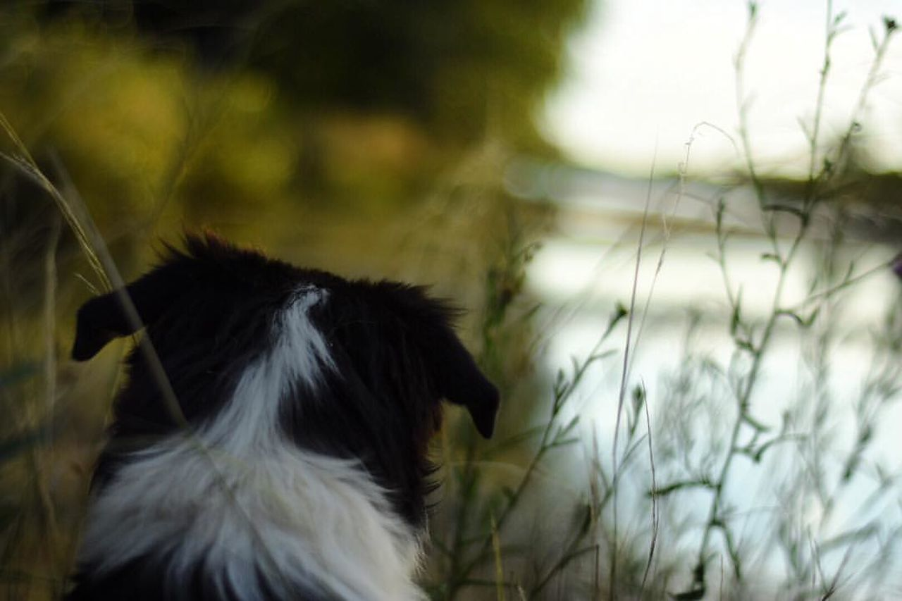 dog, one animal, pets, animal themes, domestic animals, day, outdoors, mammal, no people, grass, nature, close-up