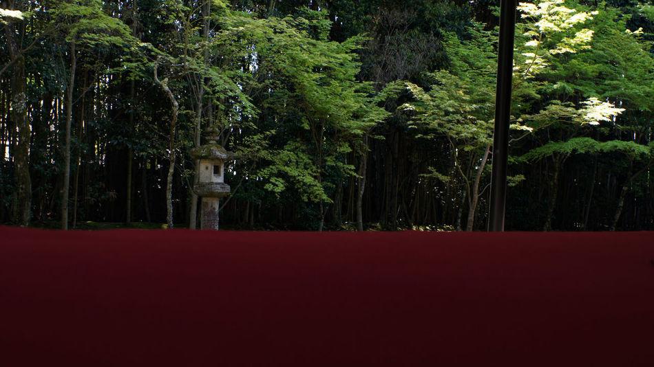 Buddhist Temple Red Day Buddhist Takumar 28mm F3.5 Garden Photography Garden Nex5 Green Color