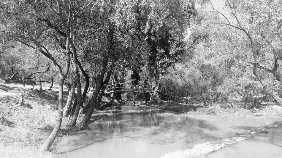 Water Tree Day Nature No People Bridge Mexico Nature Tree
