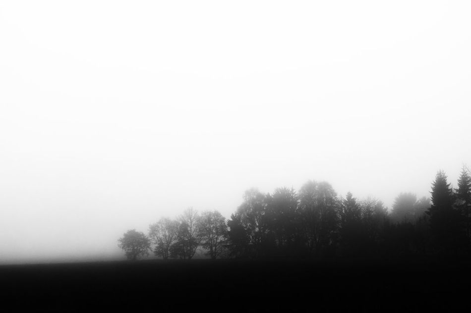 foggy landscape Beauty In Nature Black & White Fog Foggy Landscape Landscape_photography Nature Nik Collection Sky Sony Alpha 58 Tranquil Scene Tranquility Tree