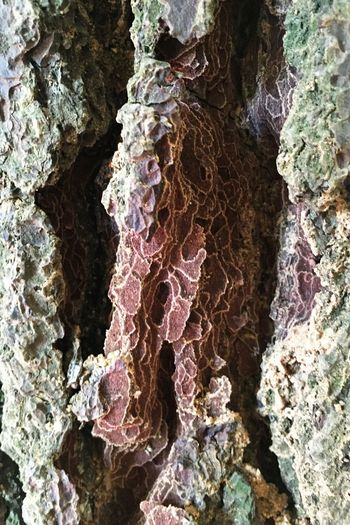 Tree Trunk Nature Rosin