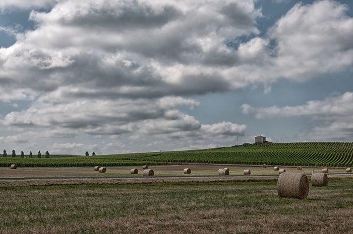 Landscape #Nature #photography Landscape_Collection D90 Sauternes Vineyard Scène Tranquille Sky And Clouds France 🇫🇷
