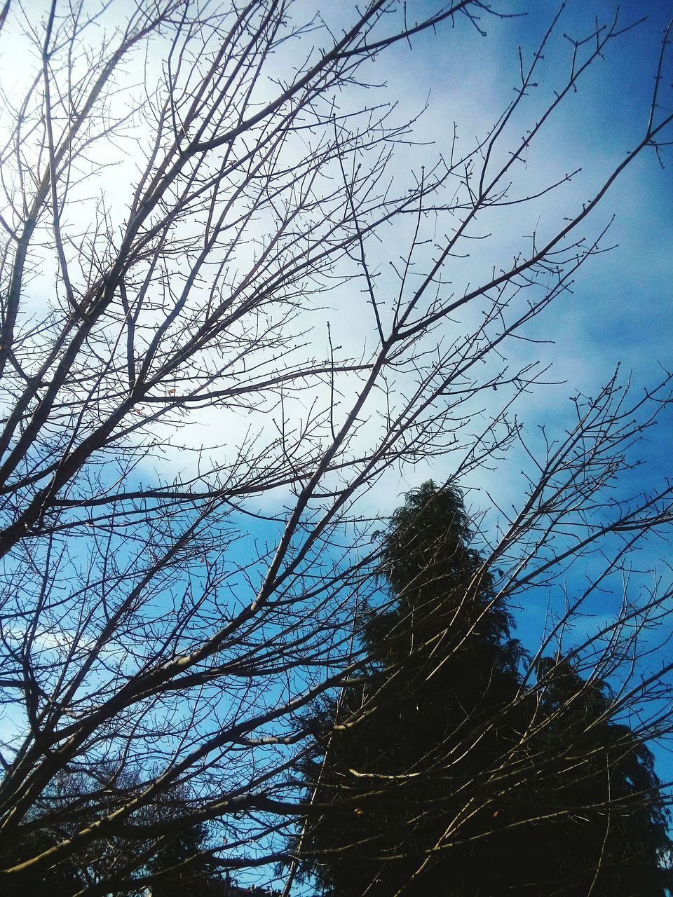 tree, bare tree, nature, sky, real people, low angle view, outdoors, day, tranquility, branch, winter, one person, beauty in nature, standing, scenics, people