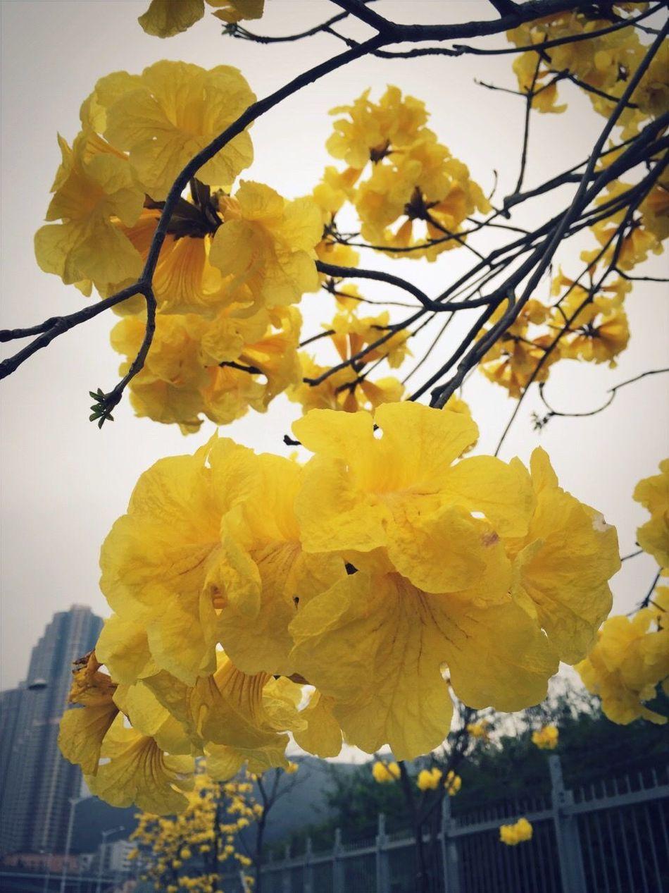 2015  HongKong HKG Tseung Kwan O Pmg_hok