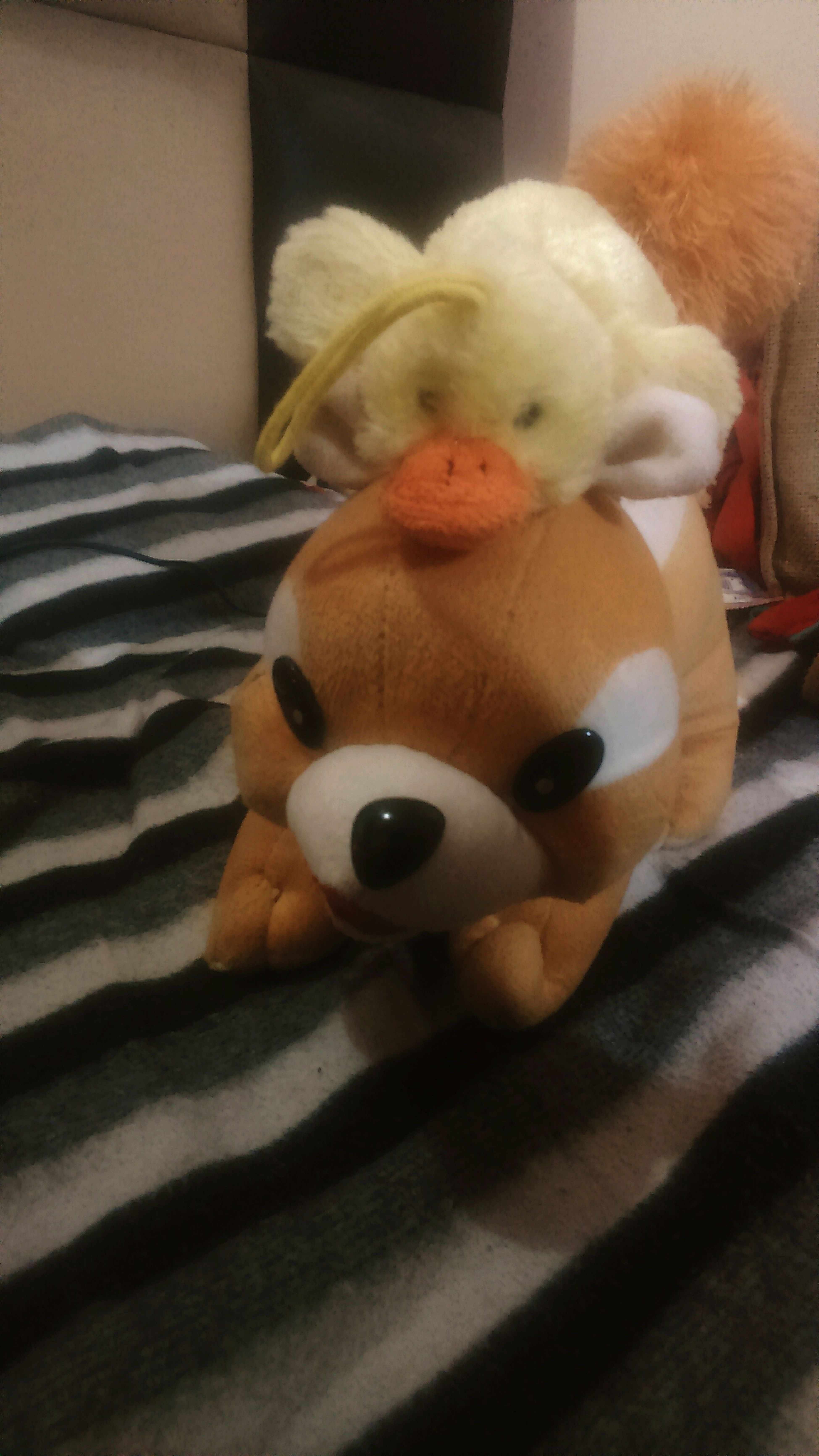 Why should Kutkut have all the fun,says Tweety!! Stuffed Toy Close-up Indoors  Mystufftoys Toy Toys For Everone Cute