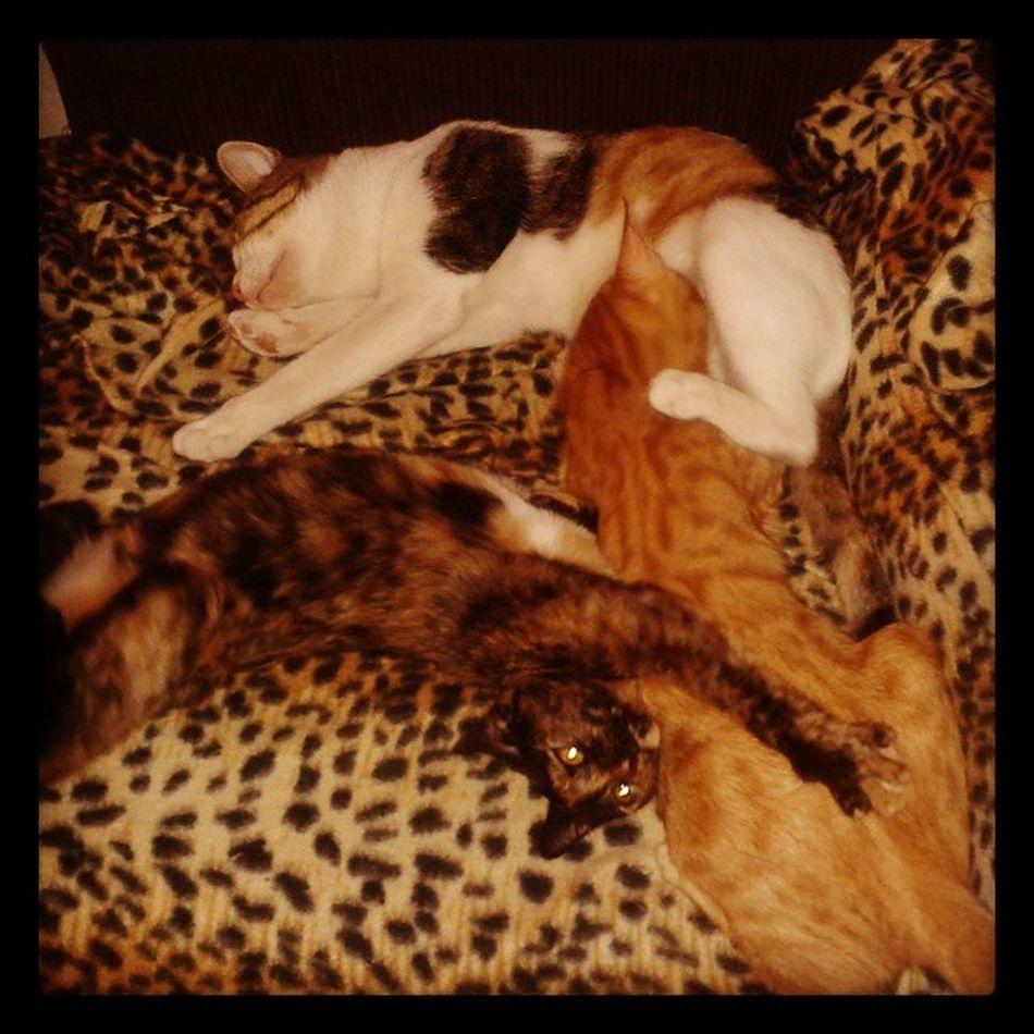 Rubio getting jealous Catweek Catsweek Catfridayphoto Cat fridaycatphoto furryfriday funnycat cutecat catlovers adoptananimal adopt
