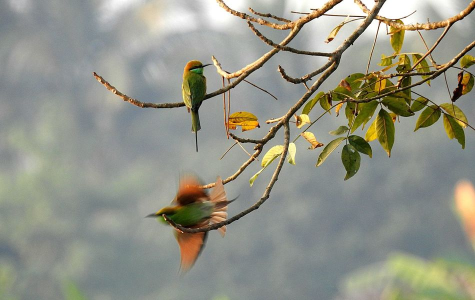 Bee eaters.. Nature Tree Focus On Foreground No People Branch Outdoors Beauty In Nature Day Bird Food Close-up Perching Birds_n_branches Birdwatching Birds🐦⛅ Birds In Wild Birds Of EyeEm  Full Frame Bird Watching Beak Birdhouse Forest Beauty In Nature Freshness Leaf