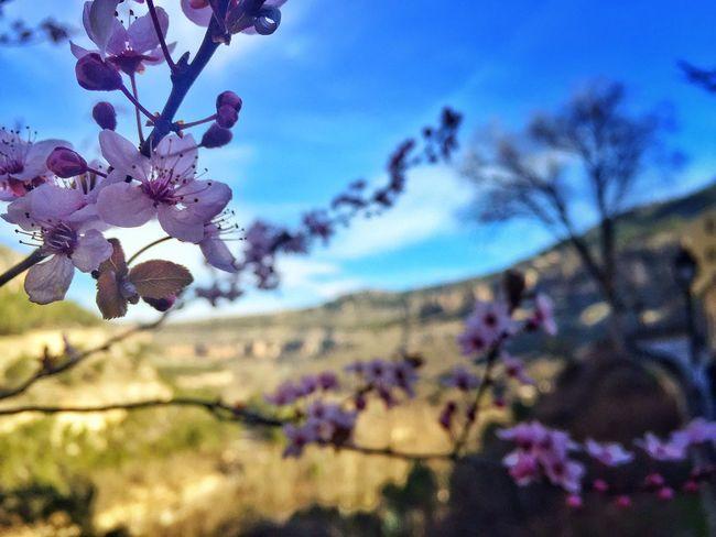 Spring Nature Cuenca