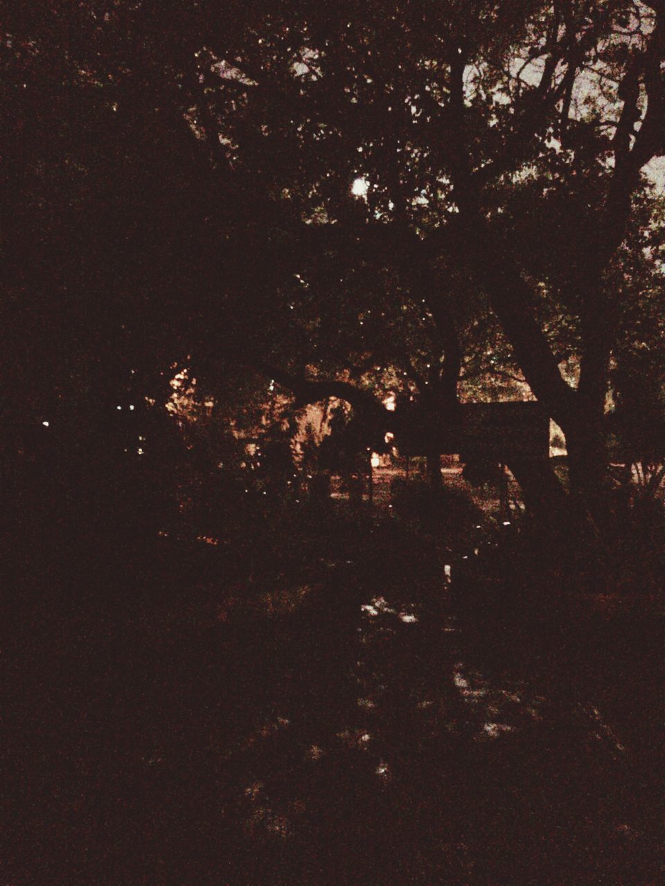 forest, nature, tranquility, night, growth, no people, tree, beauty in nature, outdoors