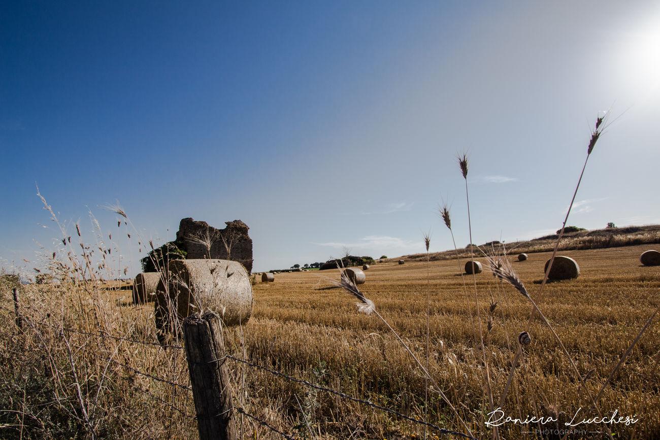 Campo Di Grano Fieldscape Nature Nature Photography Outdoors Sky Wheat Field