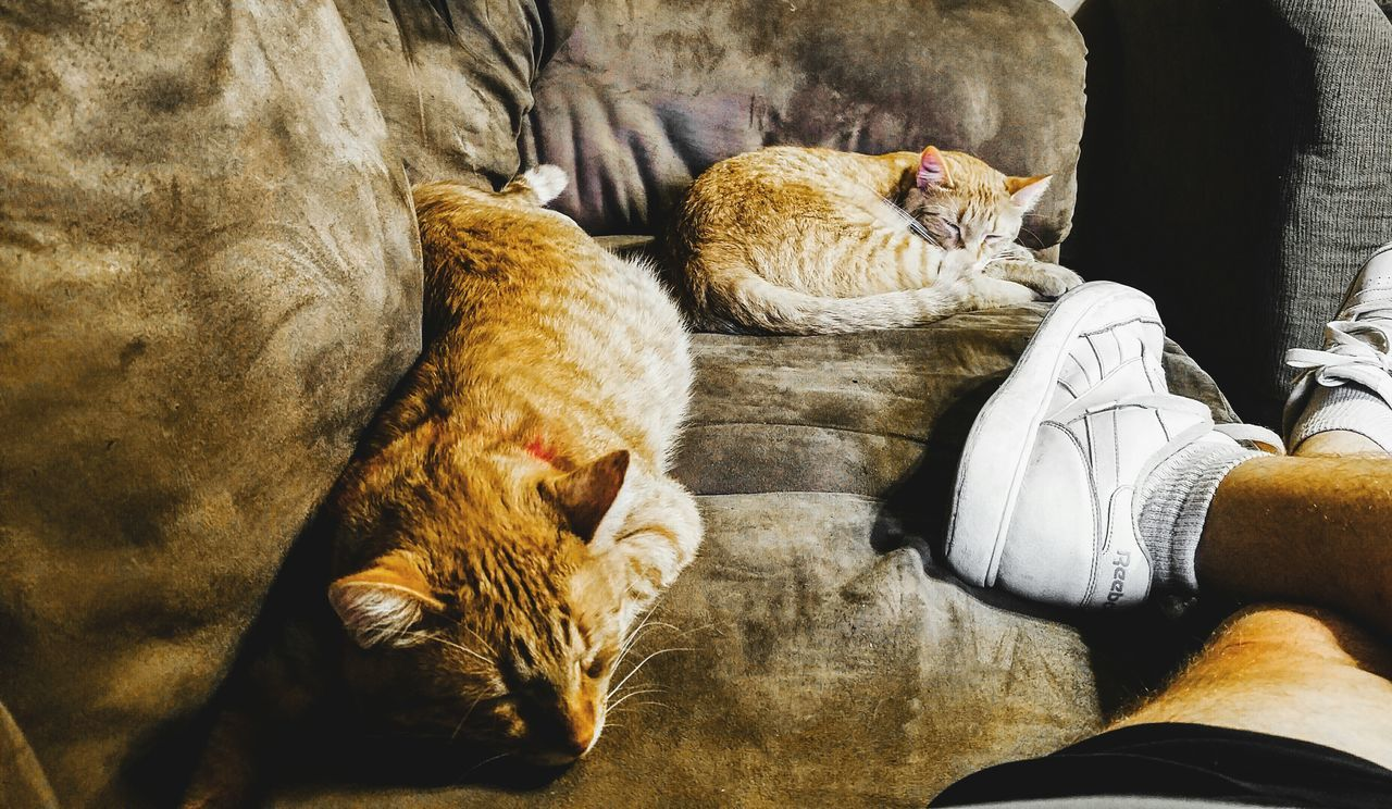Caturday Nap Caturday Catsofinstagram Cats Of EyeEm Animal Themes Real People Domestic Animals Mammal Lifestyles Togetherness Pets Low Section Indoors  Day Human Body Part People Samsung Galaxy S7 Edge Eye4photography