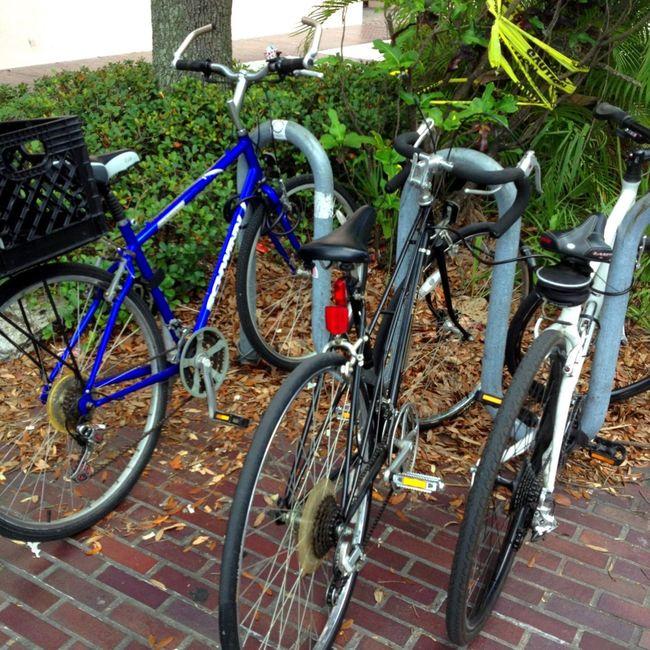 NEM Submissions NEM 2013 Bike Week The Dawn Esmond Project