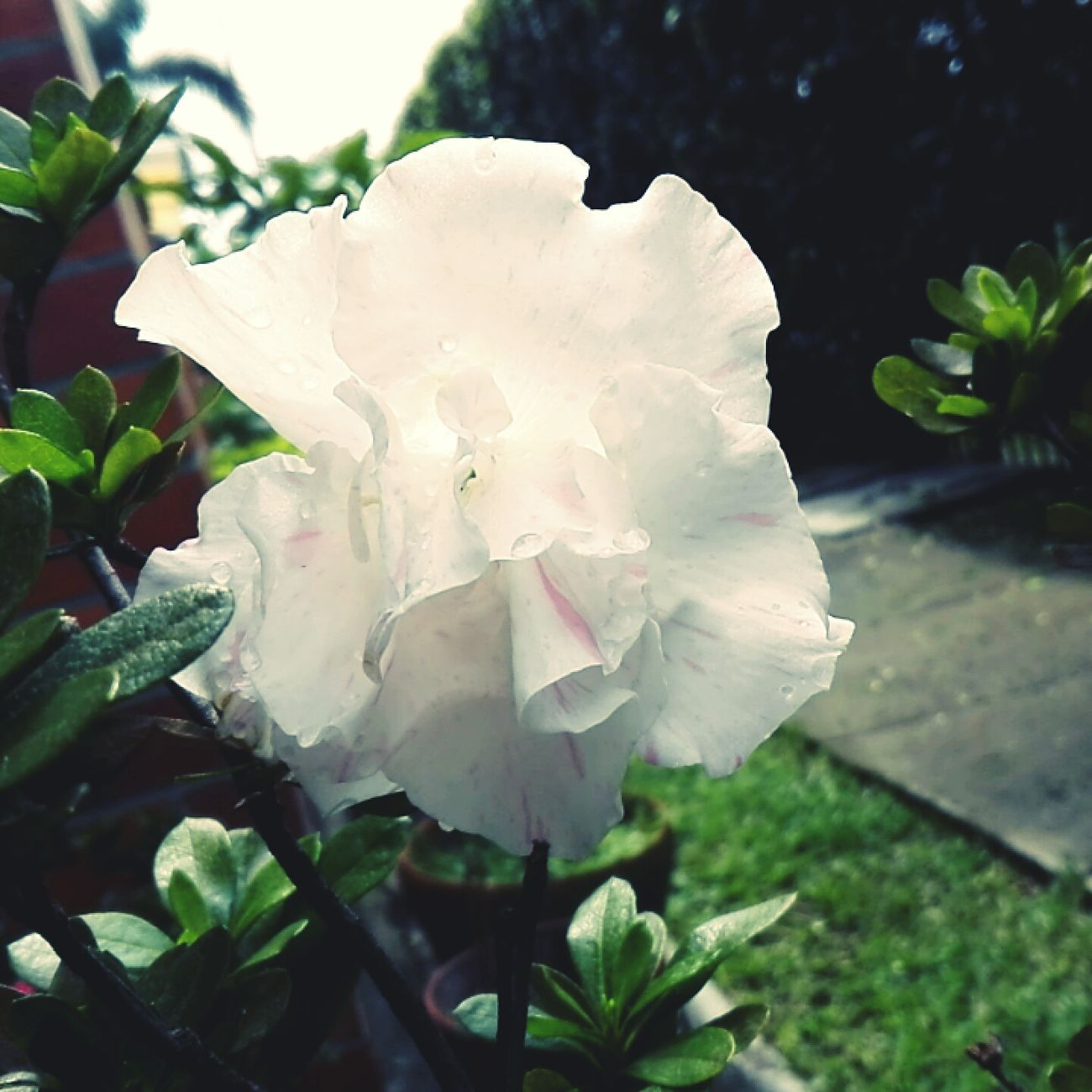 Creciendo. Flower Nature Plant Beauty In Nature Fragility Growth Close-up Outdoors Beauty First Eyeem Photo CALI COLOMBIA Green Color Love Freshness Growth Picoftheday High Angle View People Photography Transparent