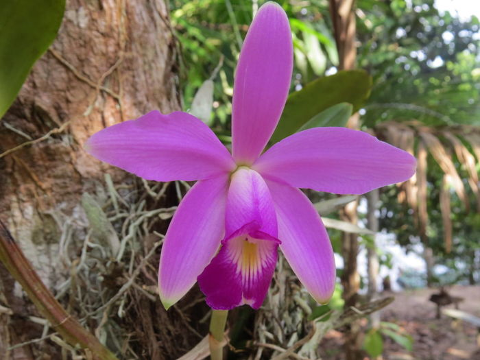 Amazon Amazon Rainforest Amazon River Amazonas-Brasil Beauty In Nature Blooming Botany Close-up Flower Flower Head In Bloom Nature At Its Best Nature Up Close Orchid Pink Color