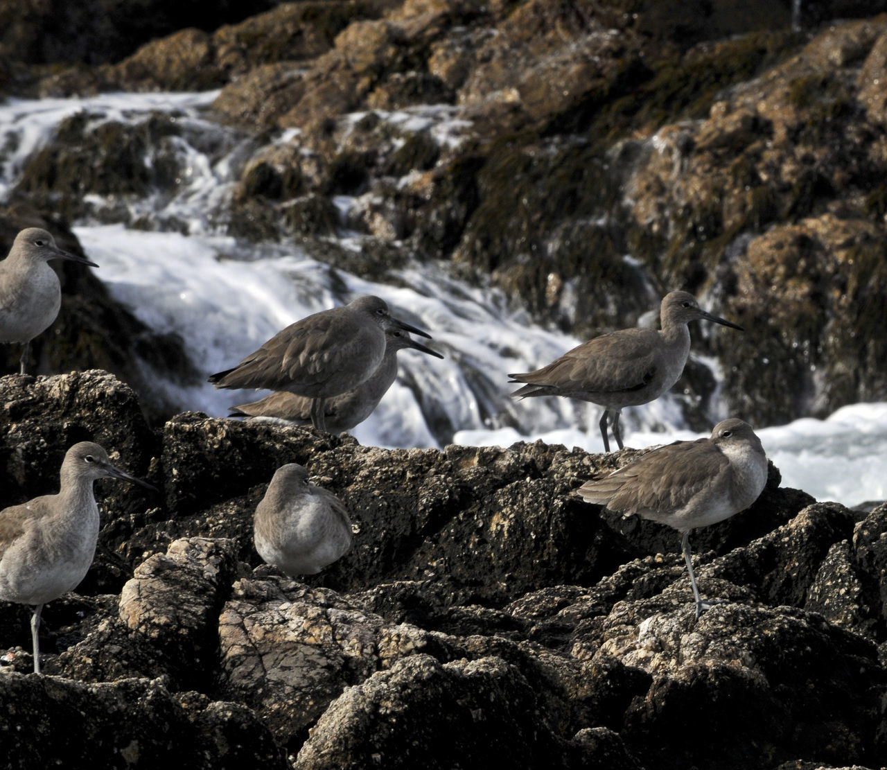 Group of birds on rock with waves crashing nearby Animal Themes Animals In The Wild Beach Bird Bird Photography Birds Day Nature No People Ocean Bird Ocean Birds Outdoors Sea, Beach, Ocean, Water