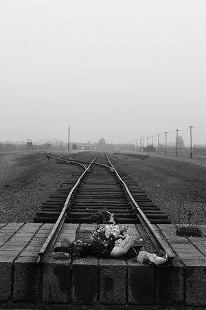 Auschwitz  Auschwitz Birkenau Flowers No People Perspective Poland Railroad Track Railway Track Train Vanishing Point World War 2