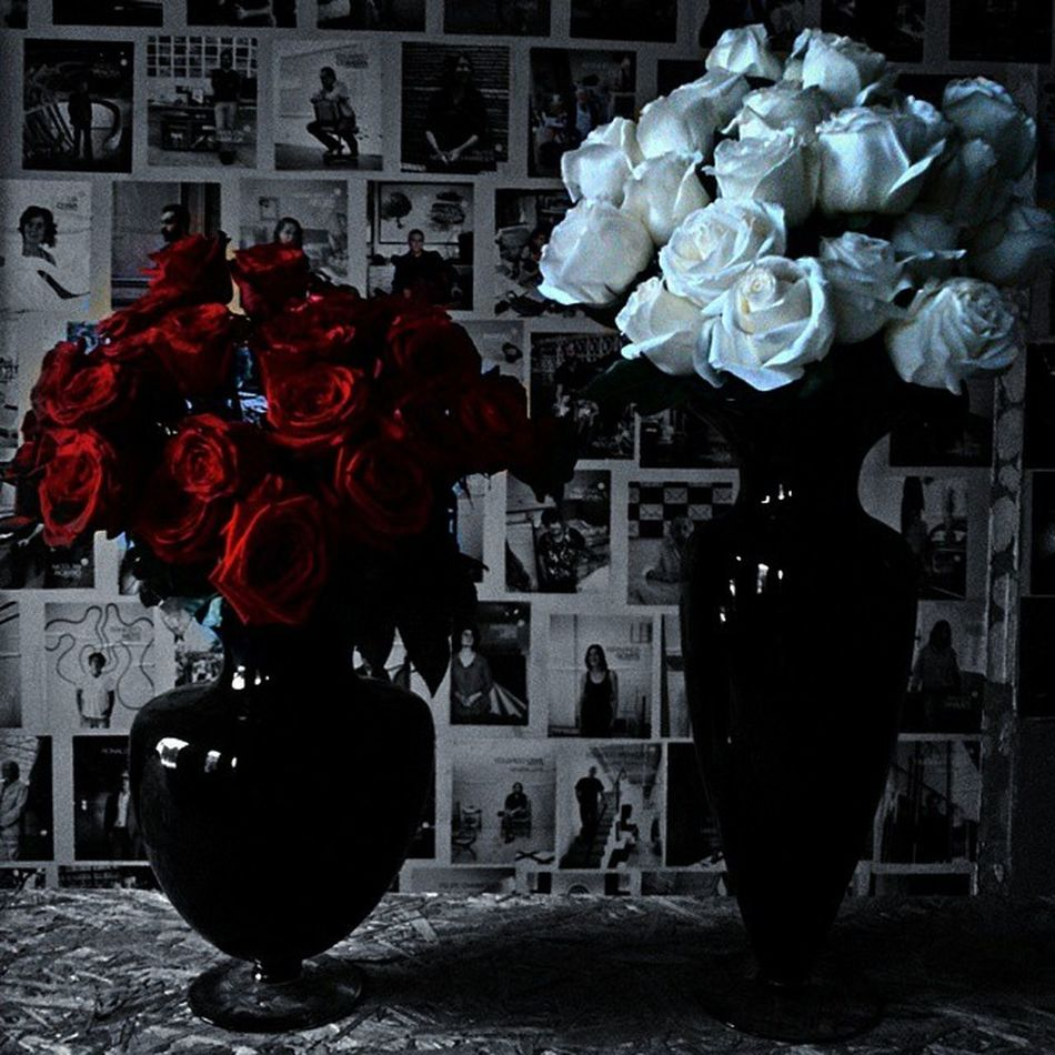 Art Beautiful Blue Solitary Invasaocriativa Madebybrazilians Feitoporbrasileiros Creativeinvasion Roses