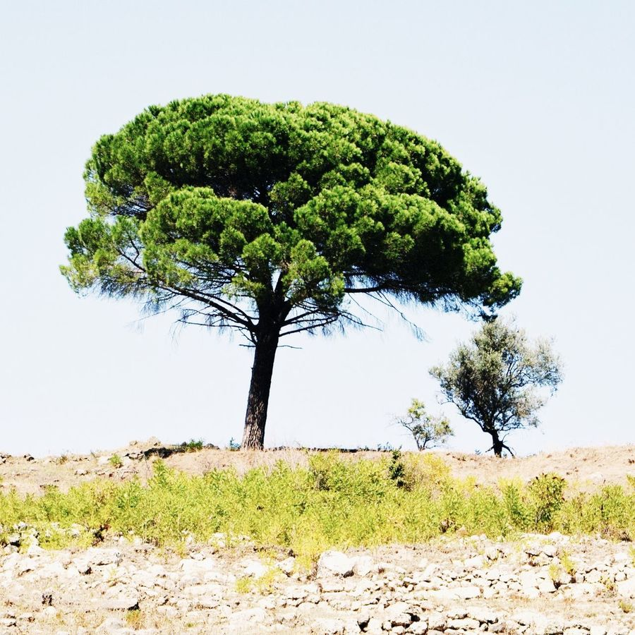 Sicily is calling. Check out my full story on Steller. Steller Stellerstories Traveling Urban Landscape Green Pine Tree Mattebox