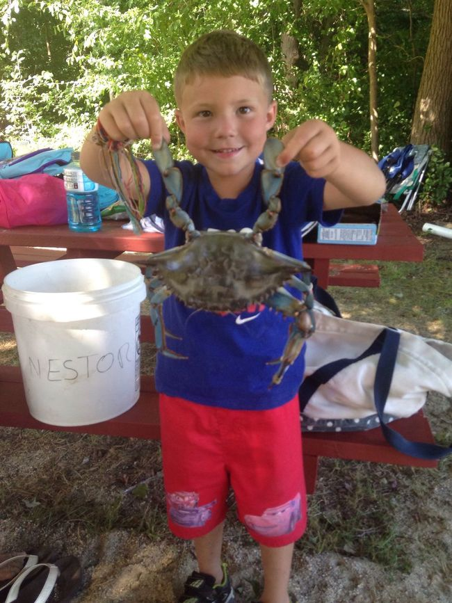 8 1/2 inch ... Blue Crab ...!!!!
