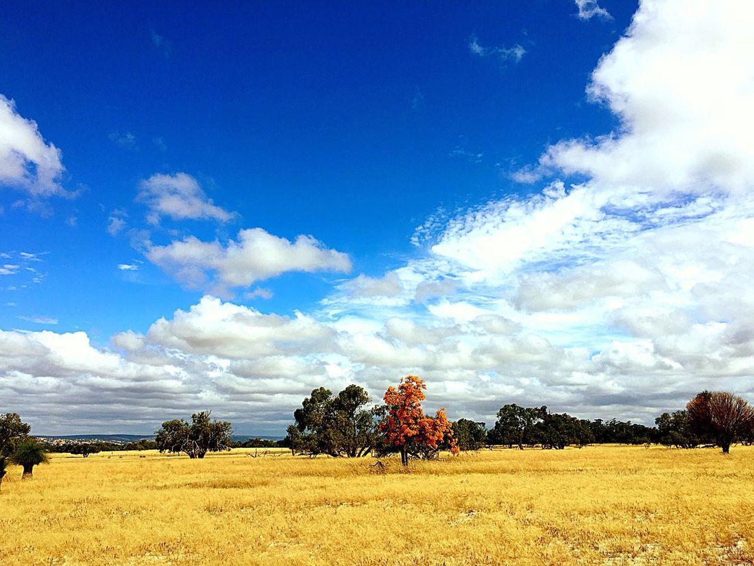 Rural Sky Blue Cloud - Sky Nature Tree Landscape Scenics Beauty In Nature Rural Scene Field No People Outdoors Tranquil Scene Day Australia Countryside Tree Beauty In Nature Nature_collection Colour Contrast Field Western Australia Farm