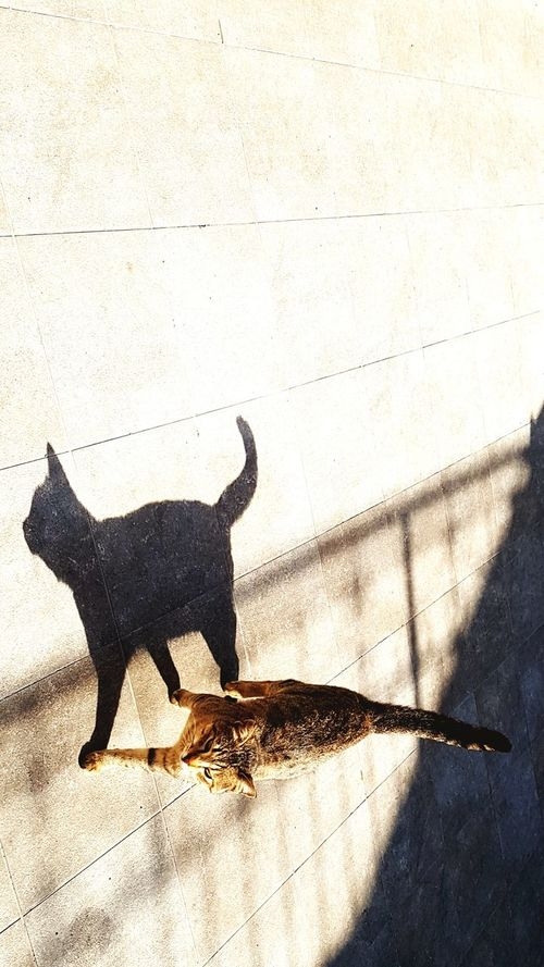 Shadow Sunlight And Shadow Black & White Catwalk Predator 2worlds Tao  Light And Shadow Sunlight shadow and its cat , shadows cat