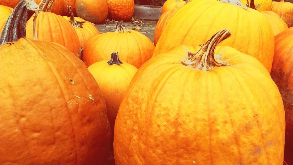 Pumpkins Happy Halowween Soon