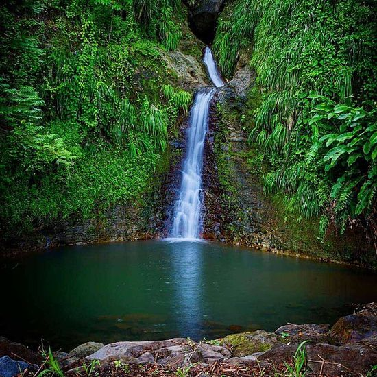 Natureaddictsun Grenada Ilivewhereyouvacation Westindies_landscape Ig_masterpiece Ig_today Ig_puertorico_ Bestvacations Livefunner Island360 Andyjohnsonphotography Amazingphotohunter Bushments