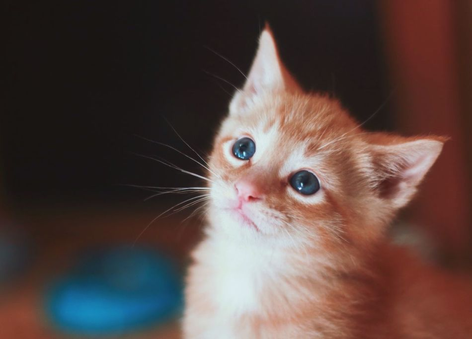 Domestic Animals Domestic Cat Pets Animal Themes Focus On Foreground Mammal Whisker Feline Close-up Portrait Cat Cats