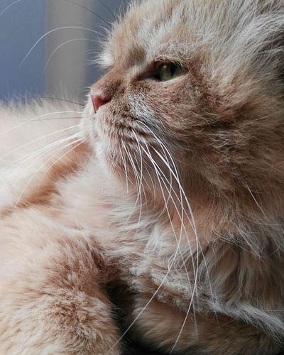 Cat Pet Love