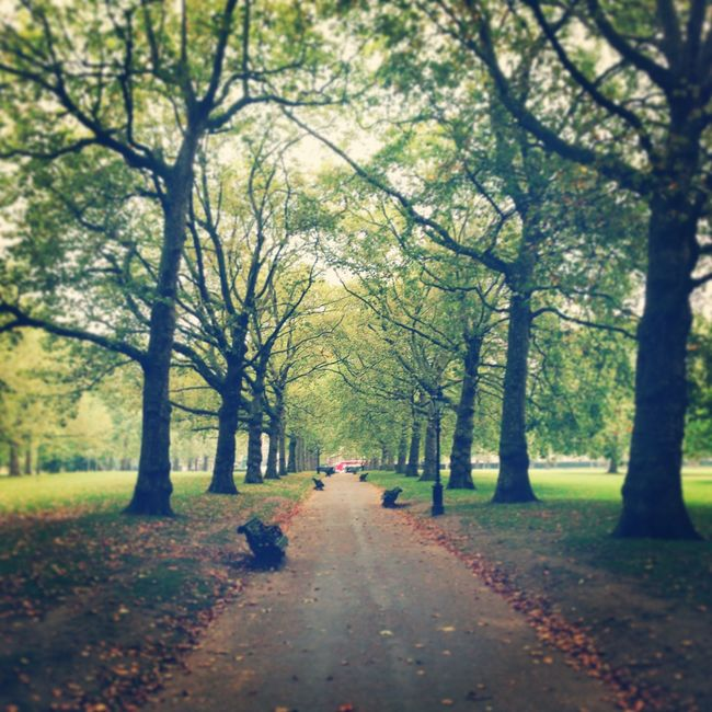 Greenpark Trees Path Relaxing Green Park London Royalpark