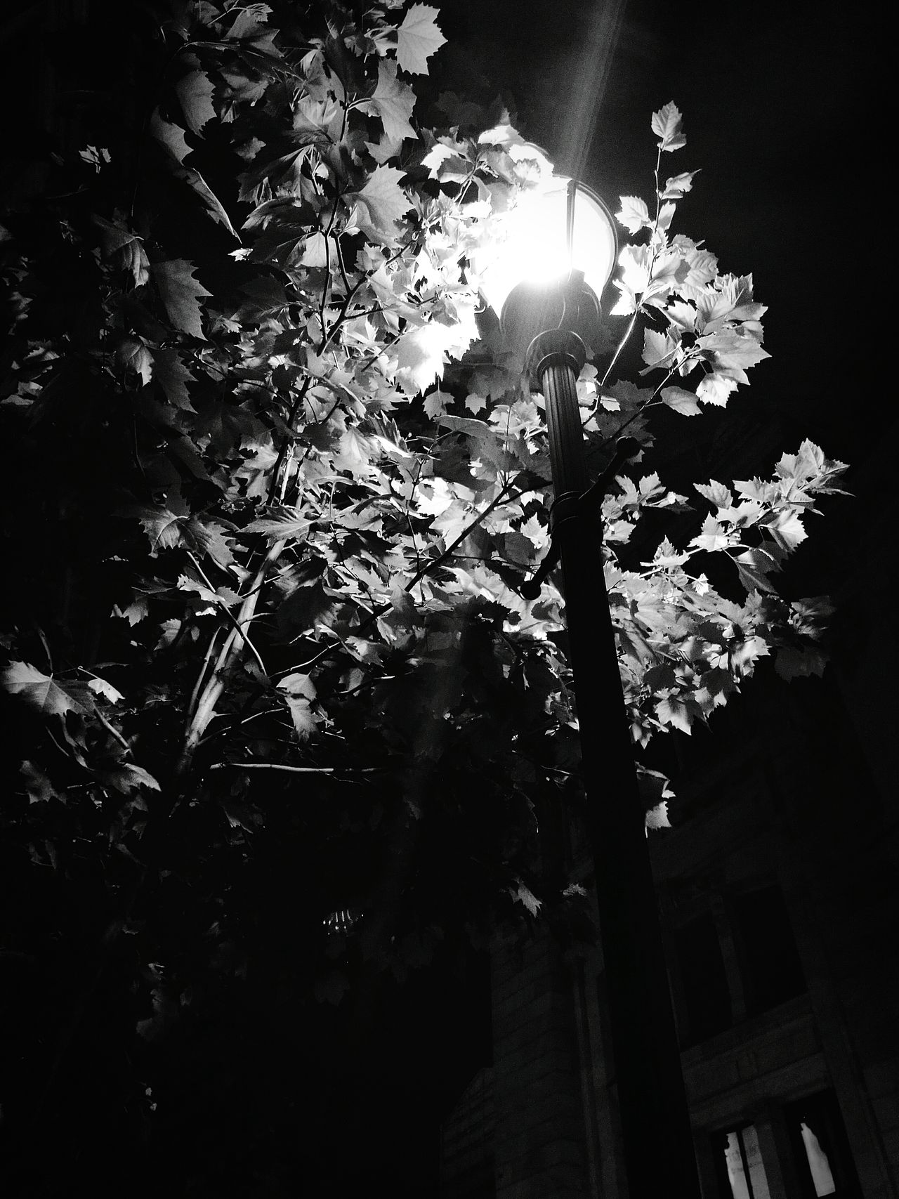 Streetlamp Light Leaves Shadows Enlightment Blackandwhite Contrast Black White Solitude Alone Darkness And Light Cities At Night OO Mission Follow_me Peaceful Lets Get Lost Trees Take A Walk Fairy Tale Monochrome Photography