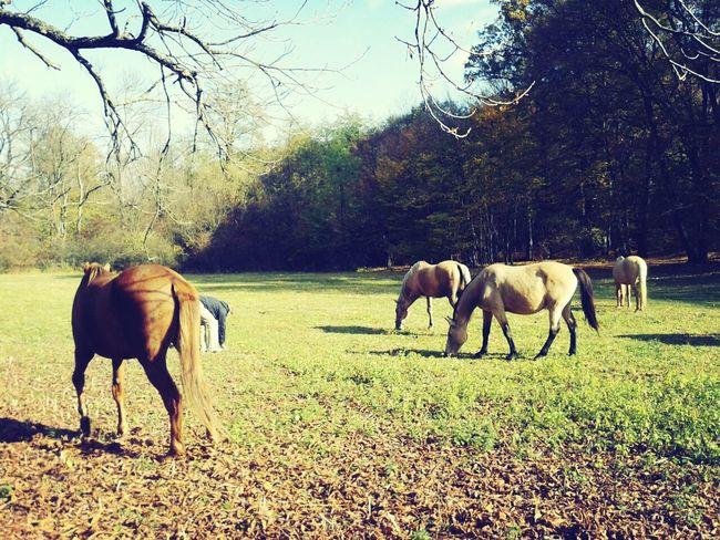 little beauties<3<3 in a field. they're free Horse Loveandlove Beauty