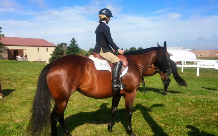 Horses Horse Riding Competition Day Majestic Shiny
