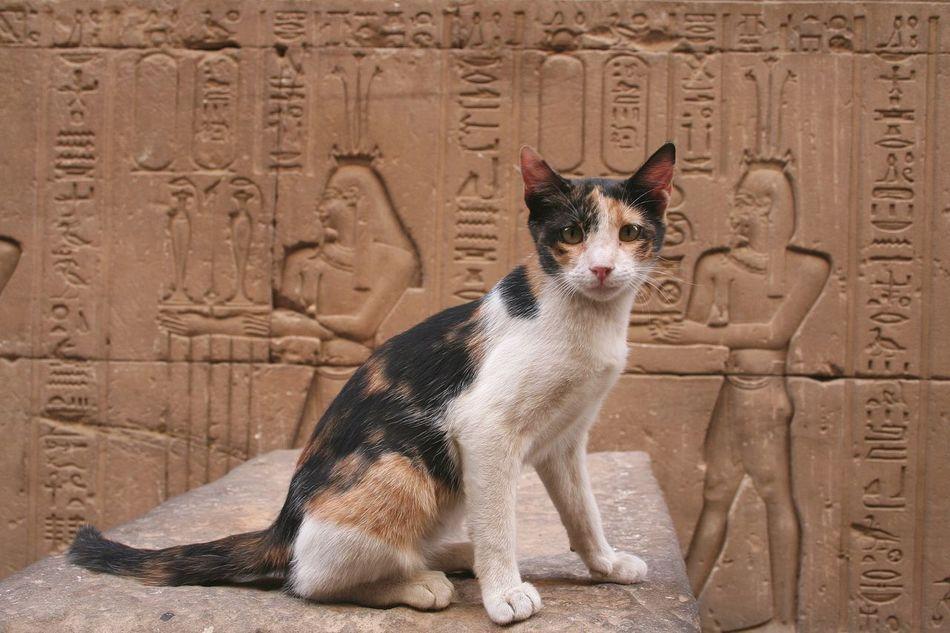 Beautiful stock photos of porträt, Ancient, Ancient Egyptian Culture, Animal Themes, Art
