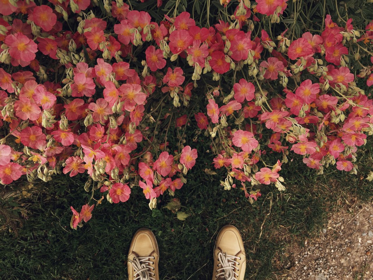 The right place... Found On The Roll Outdoor Photography Flowers Flower Flowerporn Flower Collection Relaxing Outdoors Having Fun Travel Photography Travel Destinations Hiking Enjoying Life Taking Photos Vscocam VSCO Cam Eye4photography  Hello World Traveling Close-up EyeEm Macro_collection Feetselfie Fine Art Photography