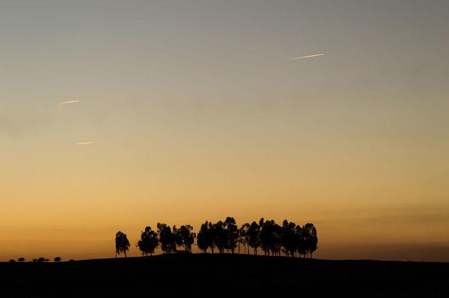 Black Light Orange Color Silhouette Sun Sunset Tranquil Scene Trees