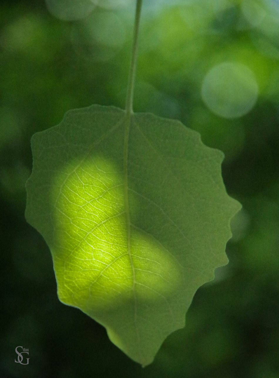 Leaf Nature Nature_collection Green Green Color EyeEm Nature Lover Light And Shadow Light Growing Alive