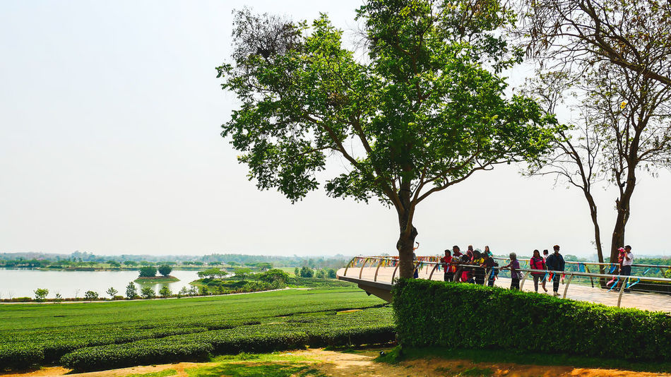Beauty In Nature Branch Clear Sky Day Field Grass Green Color Growth Landscape Large Group Of People Men Nature Outdoors Park - Man Made Space People Real People Scenics Sky Tree Water Women