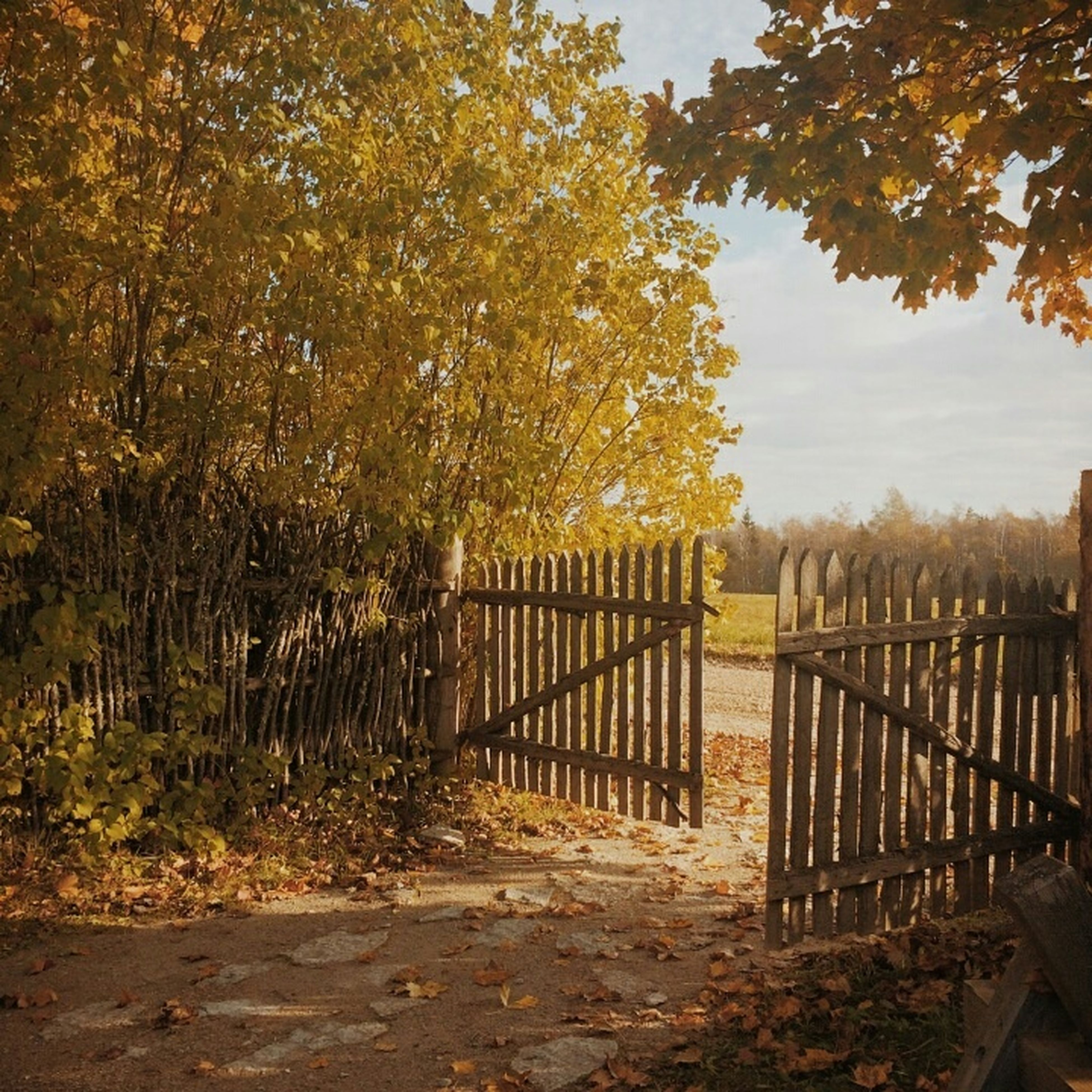 fence, railing, tree, safety, protection, tranquility, nature, tranquil scene, security, sky, beauty in nature, wood - material, metal, sunlight, autumn, outdoors, no people, the way forward, scenics, gate