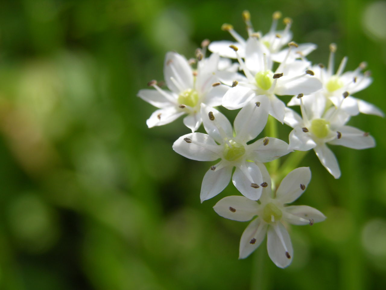 flower, nature, white color, beauty in nature, fragility, growth, petal, no people, freshness, close-up, blooming, day, springtime, plant, flower head, outdoors, tree