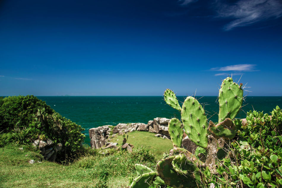 Beauty In Nature Blue Day Grass Green Color Growth Horizon Over Water Nature No People Outdoors Plant Prickly Pear Cactus Scenics Sea Sky Sunlight Tranquil Scene Tranquility Water