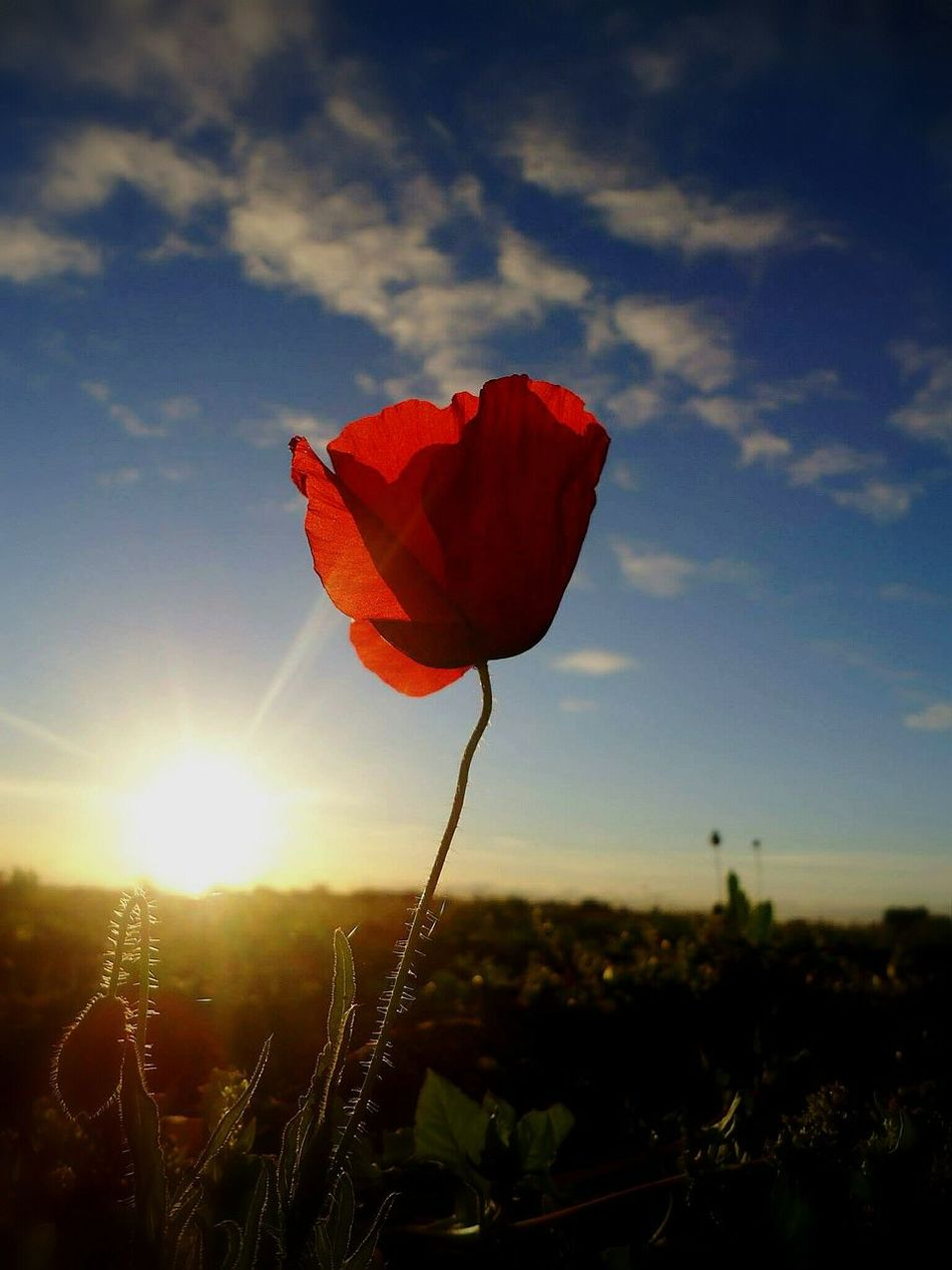 growing up alone Sunset FirstMoment Sky Sunrise Sunlight Nature Flower Red