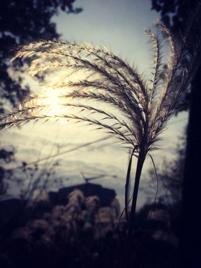 Nature Leaf Sunlight Sky