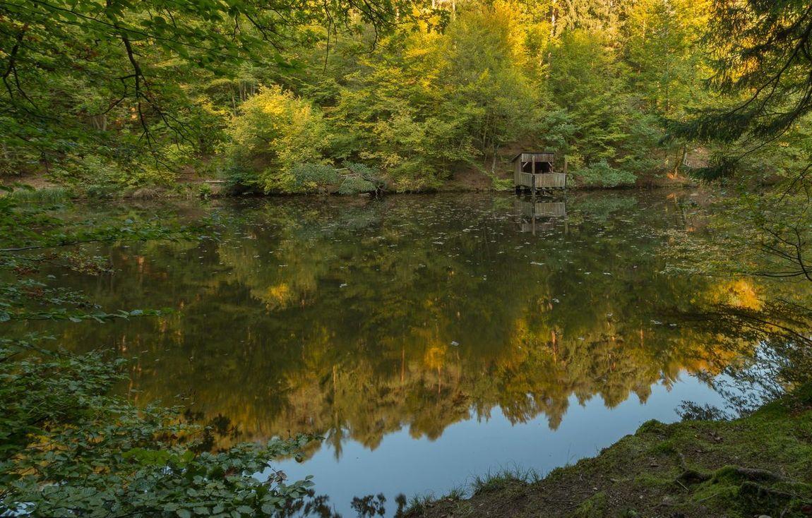 Autumn Autumn Colors Farbrausch Herbststimmung Spiegelung Im Wasser Herbstfarben Lake Leaves Outdoor Photography Reflections In The Water