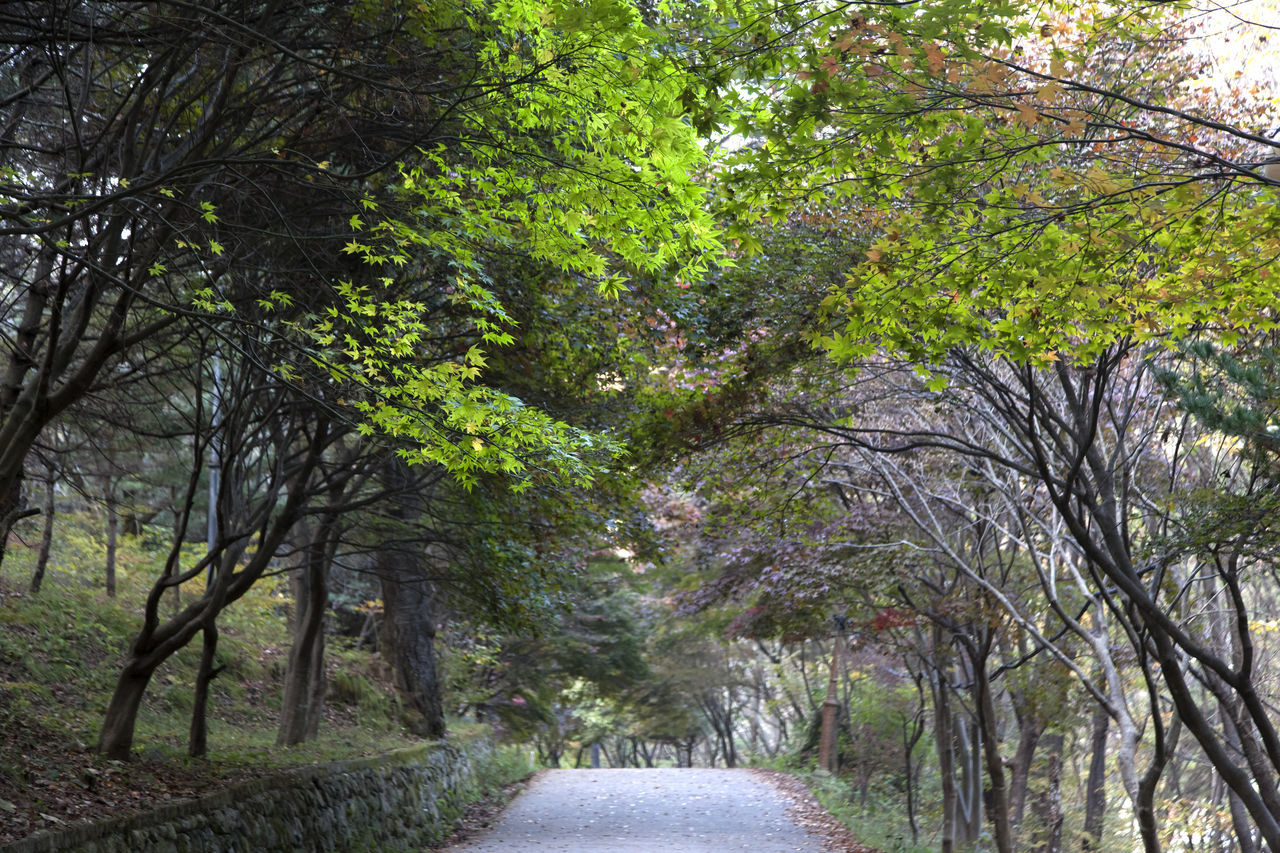 autumn in Maisan Mountain, Muan, Jeonbuk, South Korea Autumn Beauty In Nature Branch Day Fall Forest Lane Maisan Nature No People Outdoors Scenics The Way Forward Tree Walkway