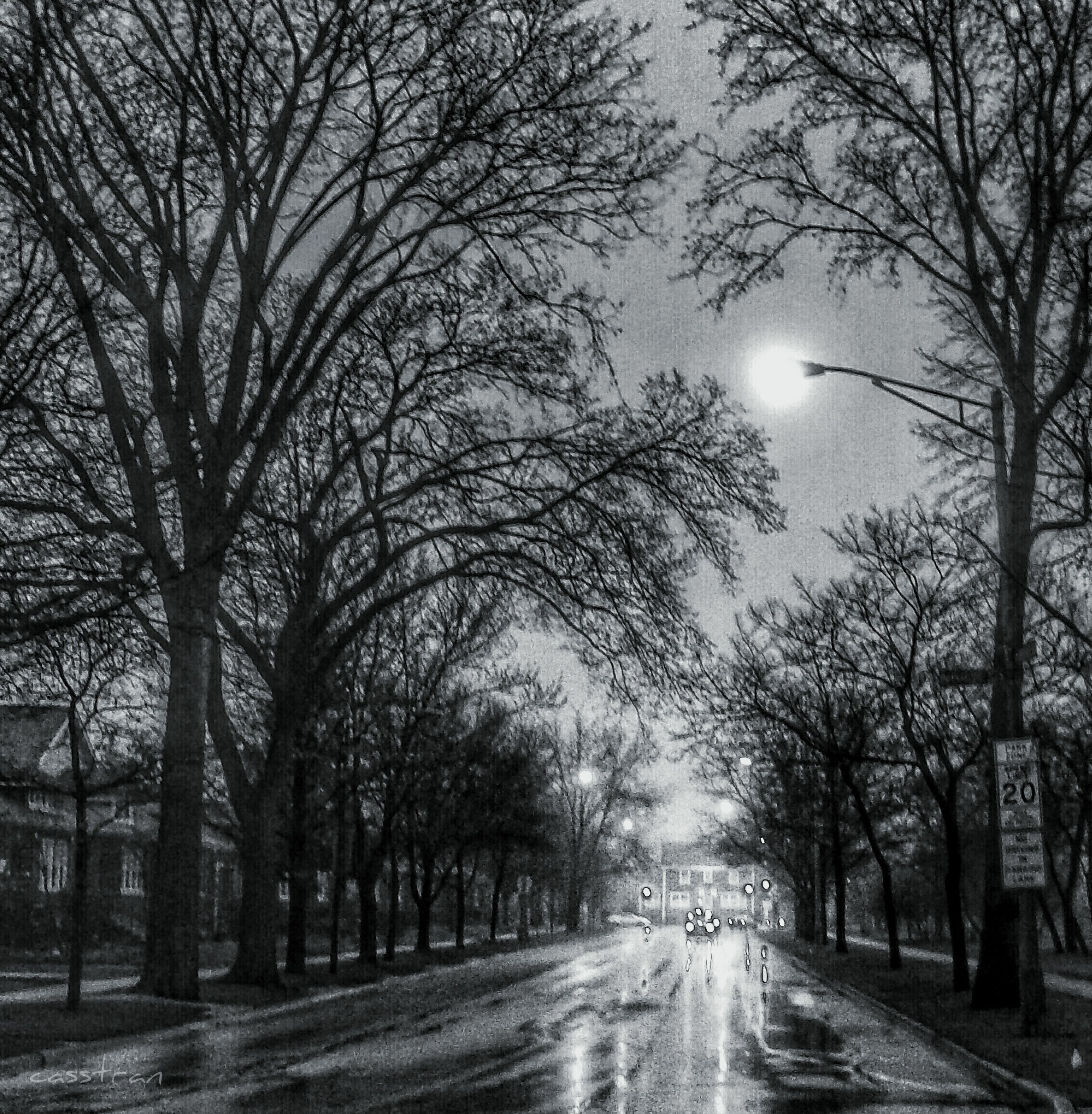 the way forward, tree, bare tree, diminishing perspective, transportation, road, vanishing point, treelined, street, empty road, empty, sky, long, branch, nature, weather, country road, outdoors, no people, street light